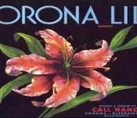corona-lily