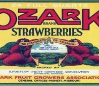 ozark-strawberries