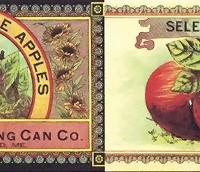 selected-maine-apples