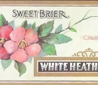 white-heath-peaches