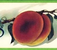 yakima-peaches